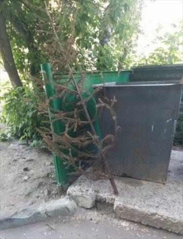 ロシアで正月用のツリーを6月なのに片付けてしまった軟弱者が見つかる