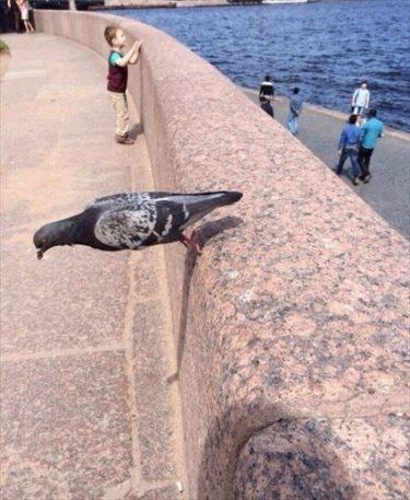ロシアで絶妙なバランスを保つ鳩が撮影される