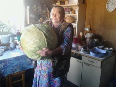 孫のためにボルシチを「少し」つくろう… でかすぎるキャベツを持ったロシアのおばあちゃん