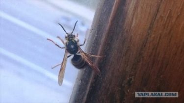 焼き尽くせ!ロシア人が刺されたハチに復讐した話
