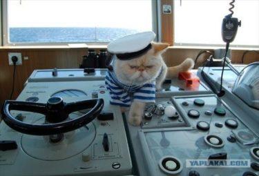ロシアにはネコ船長がいた!ニコライ・チェルニシェフスキー号に乗るネコ
