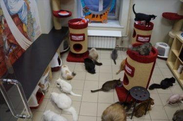 サンクト・ペテルブルクにある猫カフェ「ネコ共和国」
