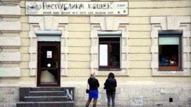 ロシアにもねこカフェができた! サンクト・ペテルブルグの「ネコ共和国」