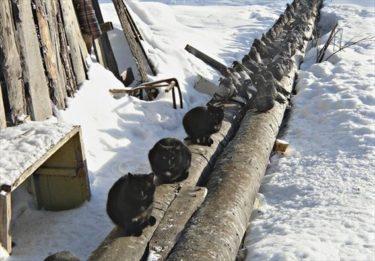 「パイプ上で争うべからず」 ロシアの冬のルール
