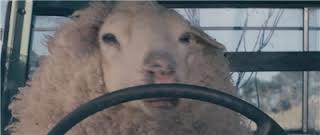 羊皮をかぶった狼!? 自分を犬だと思い込むロシアの羊