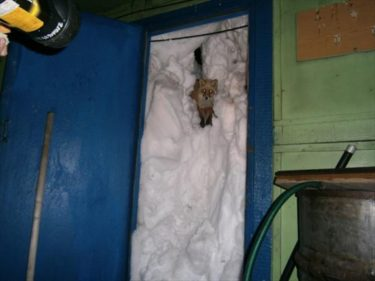 雪?きつね?どっちに驚けばいい?サハリンで撮影された玄関前の写真