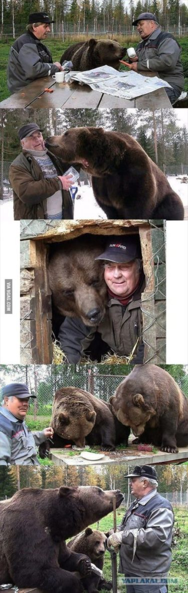 ロシア人は熊が好き!暖かくなってきたからダーチャで熊とウォッカでも飲もう!バラライカも忘れずにね!