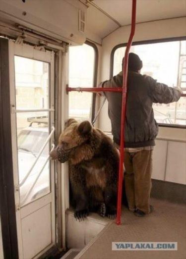 バスに熊が乗ってる。だから何?シベリアの何も変わらぬ日常の様子