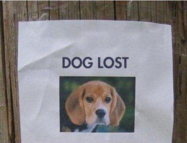 ロシアの猟師から学ぶ逃げた犬の見つけ方探し方