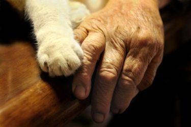 ロシア人「日本の猫とおばあちゃんの写真がかわいい!」
