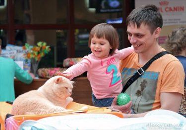 ロシア人はネコが大好き!ロシアのネココンテストの写真