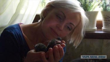 屋根にいた鳥の雛を育てて空に返したロシア人の話