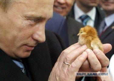 プーチン大統領が動物たちと戯れてる写真がほのぼのしてるはずなのになぜかおそロシア