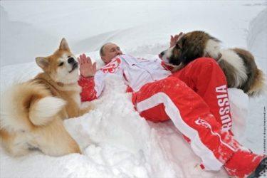 「こいつらがプーチンの犬か・・・」 秋田犬「ゆめ」と戯れるプーチン大統領を見たロシア人の反応