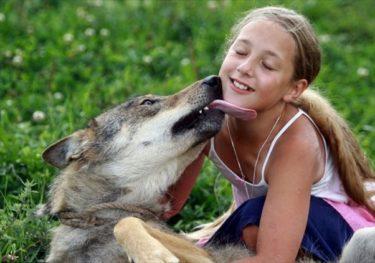 オオカミにまたがる少女!ベラルーシのオオカミと暮らす家族