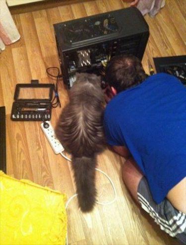 ロシア人「ネコはやっぱり賢い!ネコがPCの修理を手伝ってくれた!」